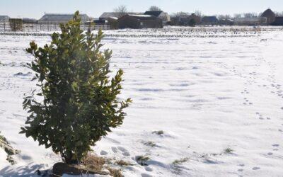 Winter op de Duintuin